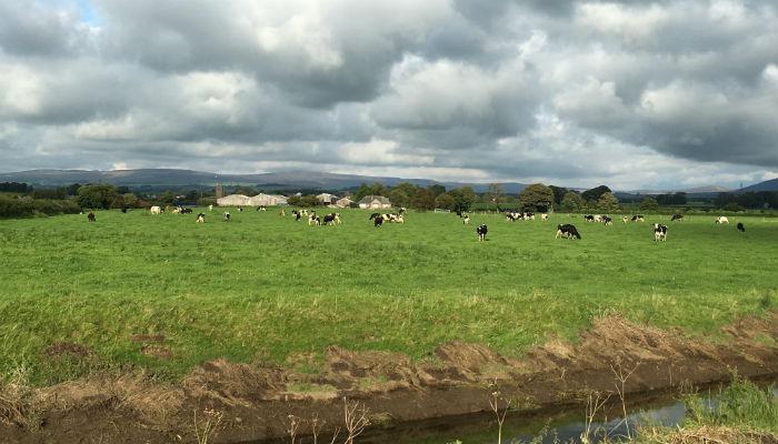 Cows_Sized.jpg