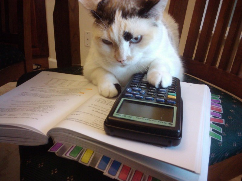 cats-doing-homework.jpg