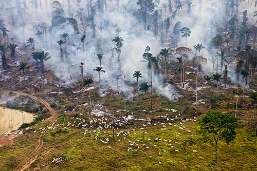 Overshoot-Cows-and-Smoke_Daniel_Beltra_PopMedia_large_500.jpg