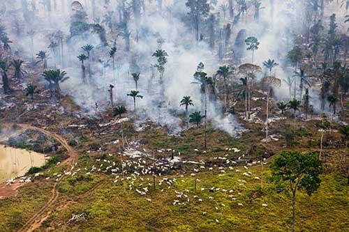 Overshoot-Cows-and-Smoke_Daniel_Beltra_PopMedia_large_500.jpg