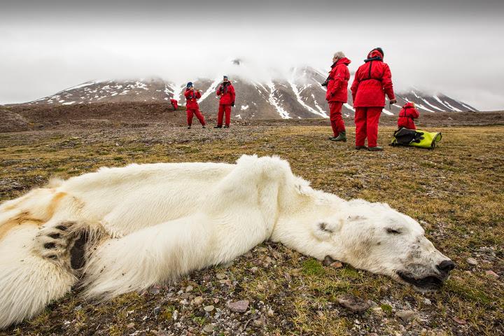 Climate-Chaos-Dead-Polar-Bear.jpg