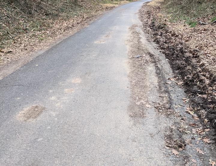 tree_truck_mud_below_Norton_path.jpg