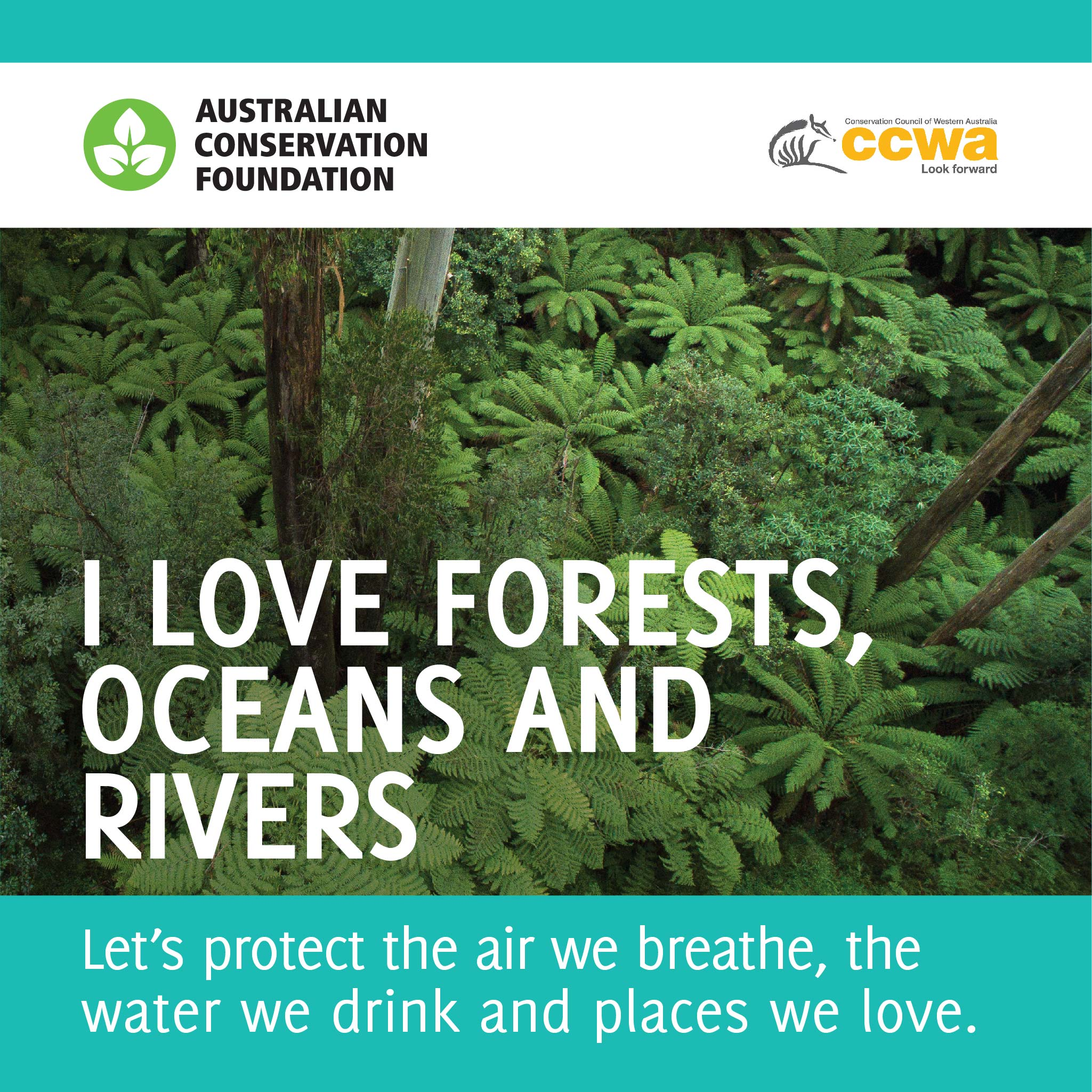 ACF_Election_shareable_2048_x_2048_px_CCWA-FOREST.jpg