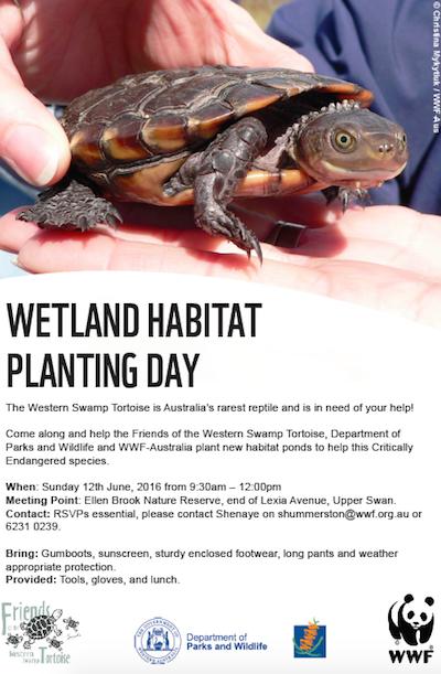 wetland-planting-ellenbrook.png