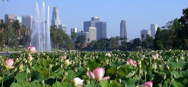 rsz_epoch_times_echo_park_lake_lotus_660_300.jpg
