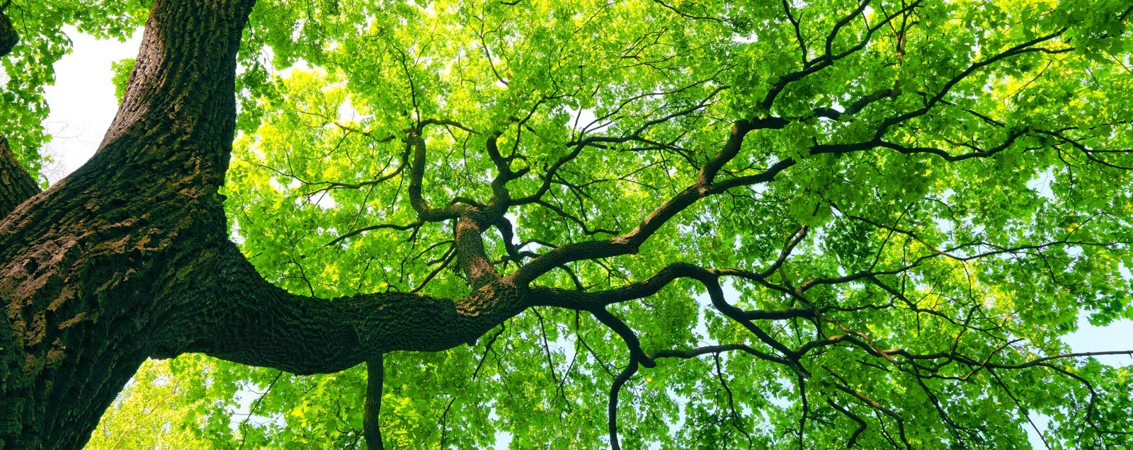 tree_care_1.jpg