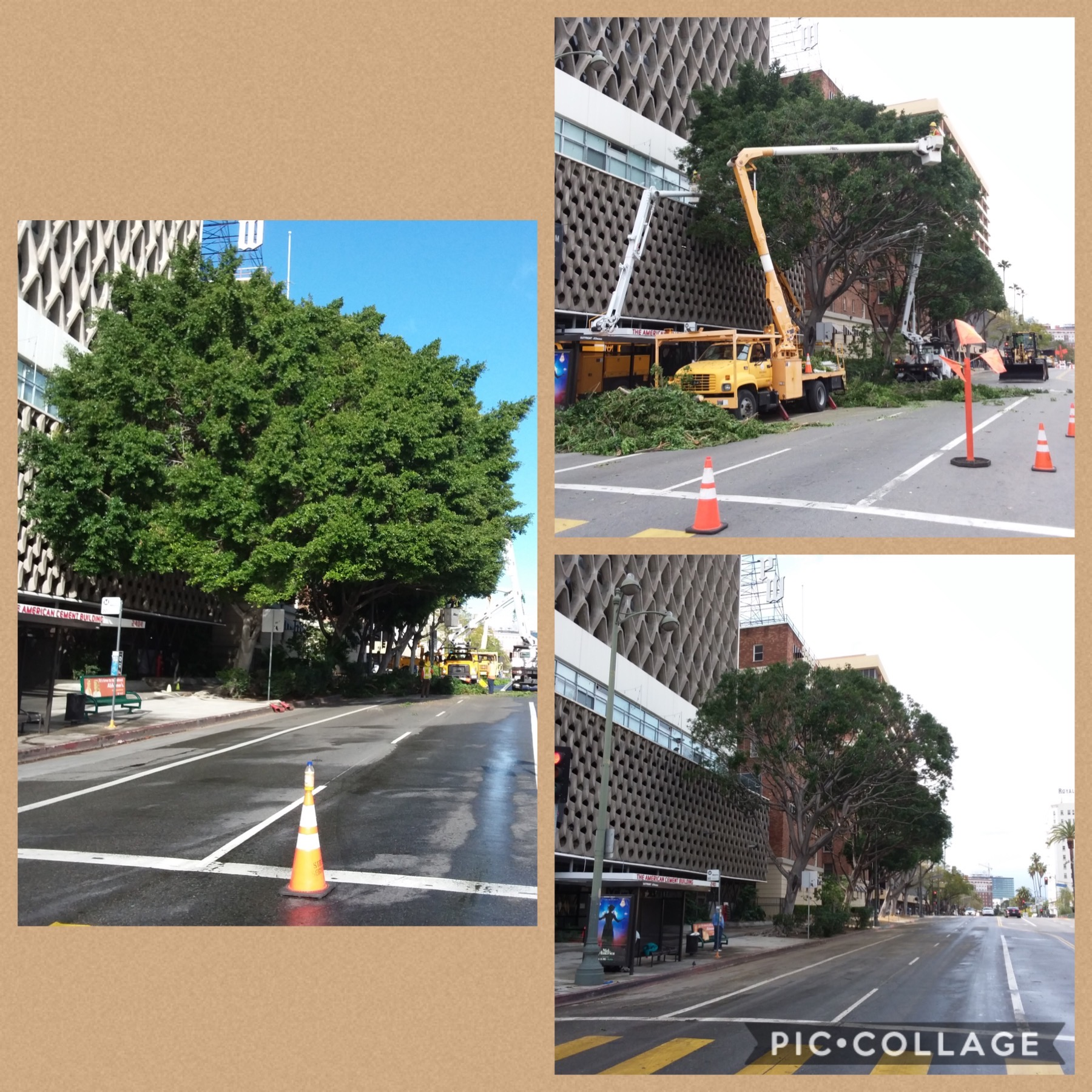 Wilshire Tree Trimming