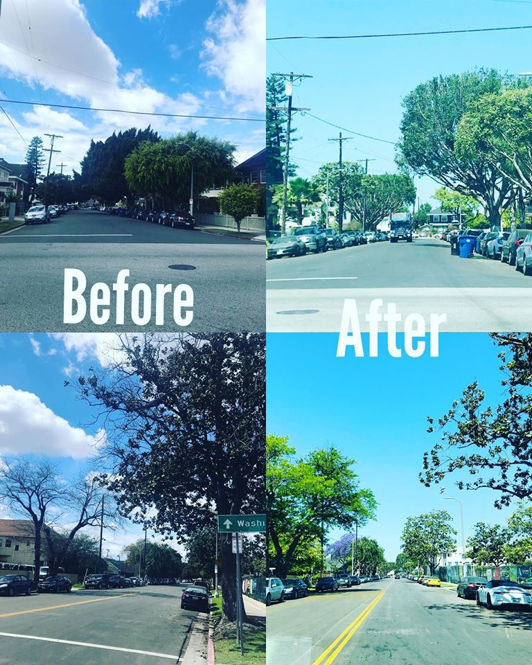 Trees Trimmed in Pico Union from Toberman Street to Burlington Ave 5-5-2020