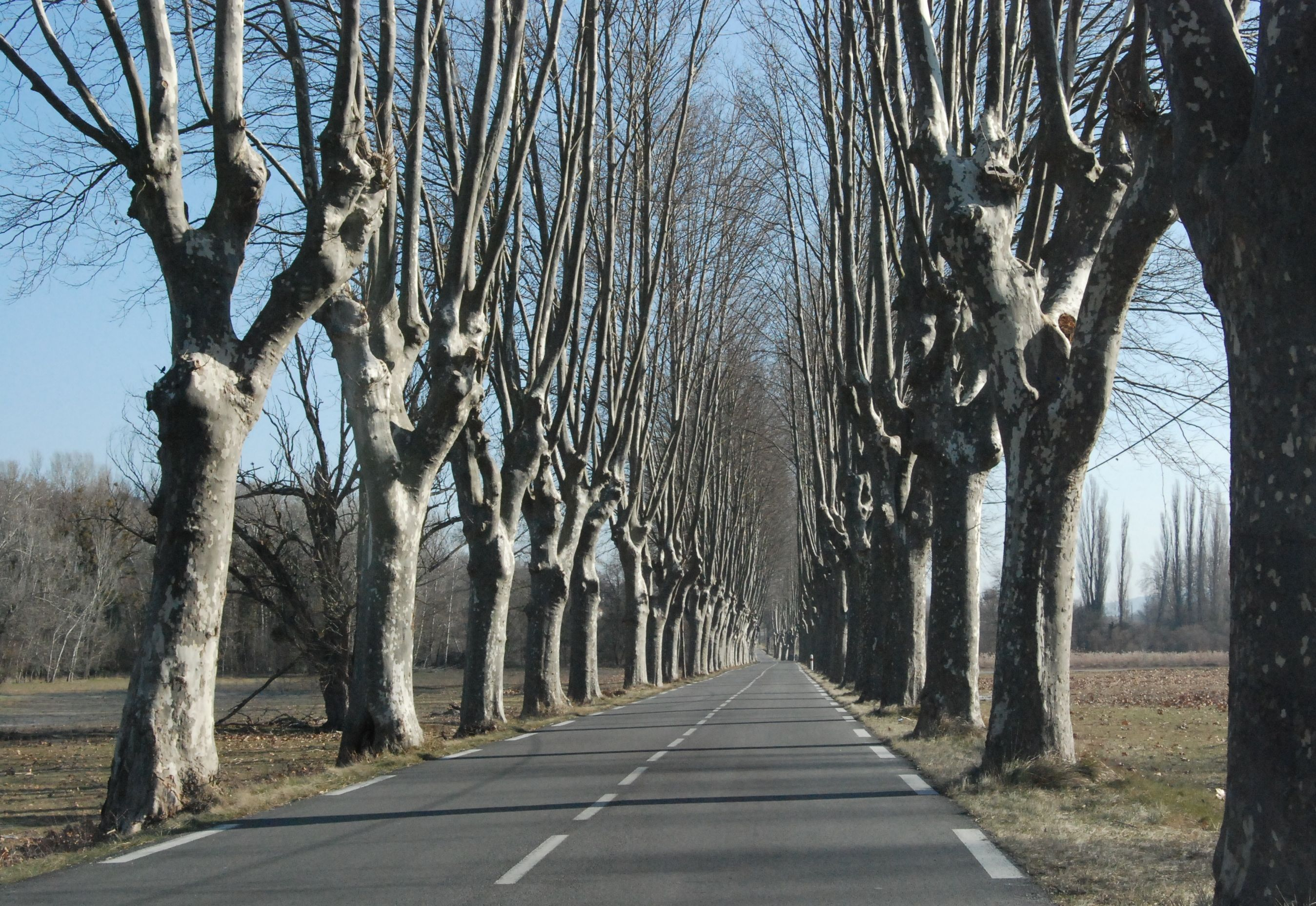 open_road.jpg