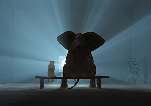 Elephante_room.jpg