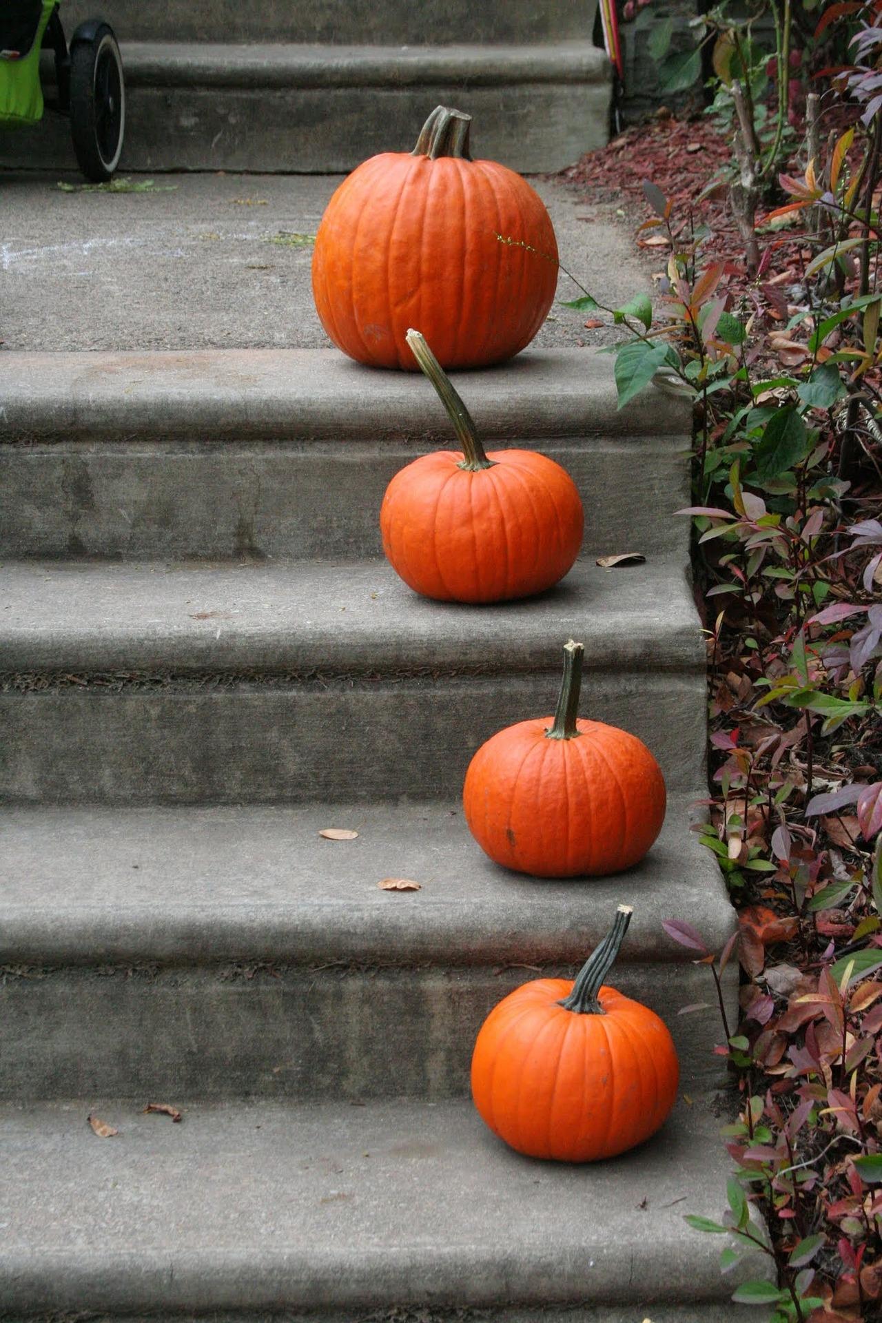 pumpkin-1170272_1920.jpg