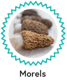C: Morels