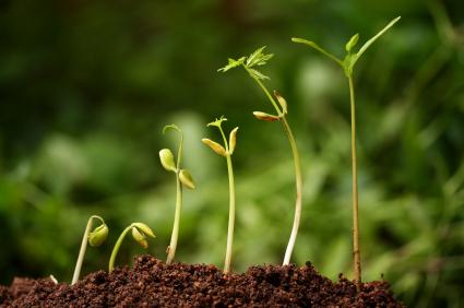 Growing-Plant.jpg