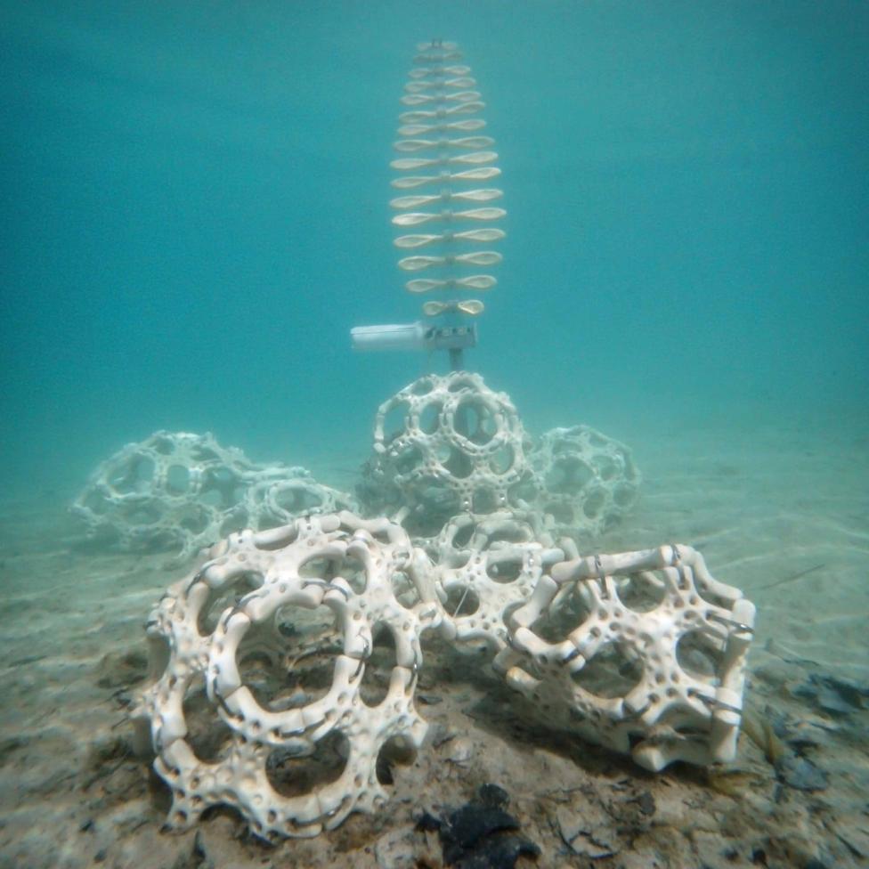 koralysis_3.png