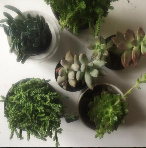 succulents_tcm_blog.PNG