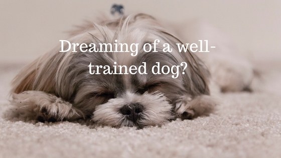Dreaming_of_a_well-trained_dog-.jpg