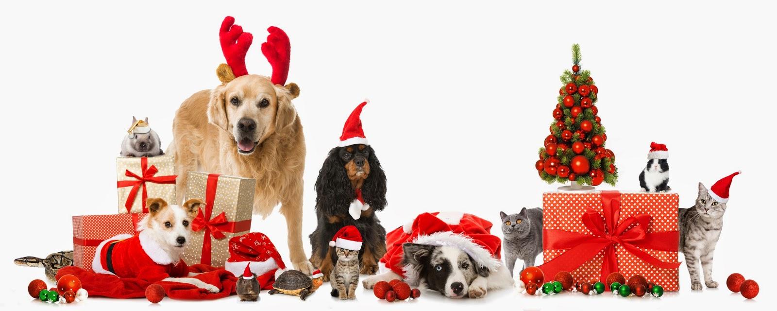 pet_christmas.jpg