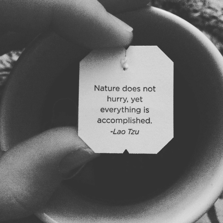 tea_wisdom.jpg