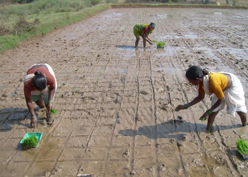 Indian-women-sowing.jpg