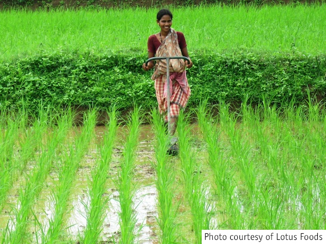 Lotus_woman_working_in_rice_field_courtesy.jpg