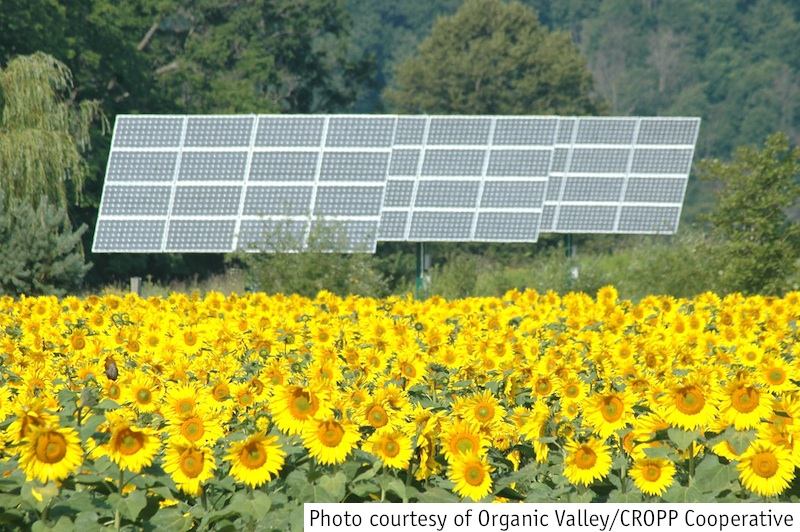 Solar panel at Organic Valley
