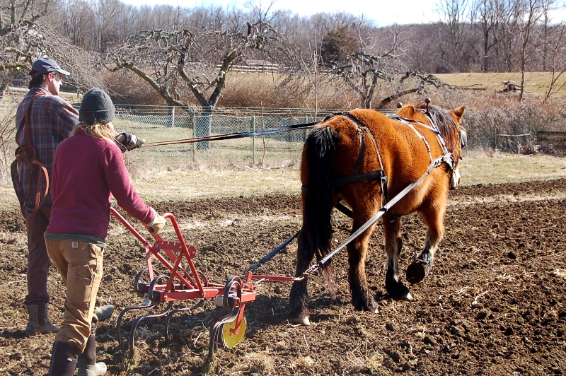 NY-Glynwood-working_with_horse_April_2013_012.jpg