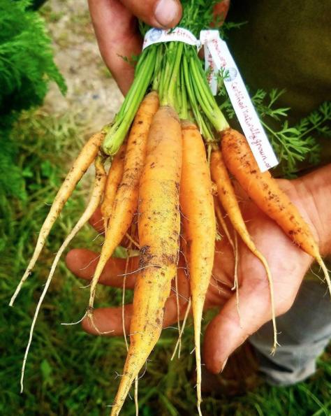 Sassafras_Hill_Farm_CNG_Carrots_.png