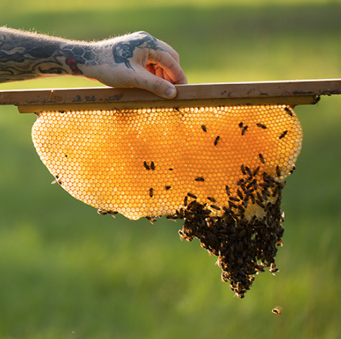 CNG_Beekeeper_Aaron_Jennings.png