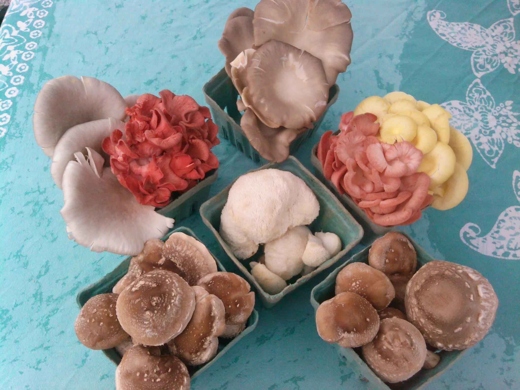Fat_Top_Mushrooms_CNG.jpg