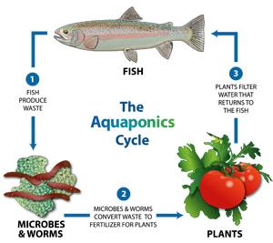 aqua-cycle_cartoon.jpg