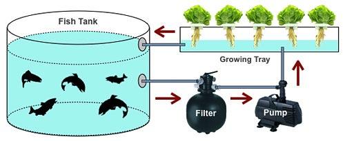 aqua-cycle_schematic.jpg