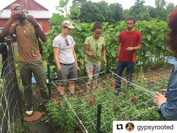 Certified Naturally Grown-Gypsy Flower Farm