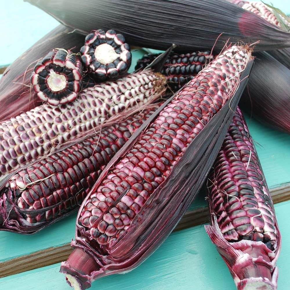 Certified Organic Alternative Sweet Corn Harris Seeds Certified Naturally Grown Business Ally