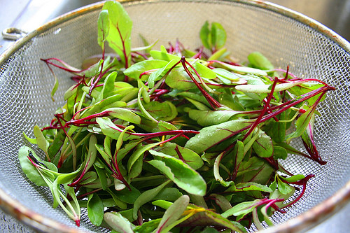 Organic Alternative Microgreens