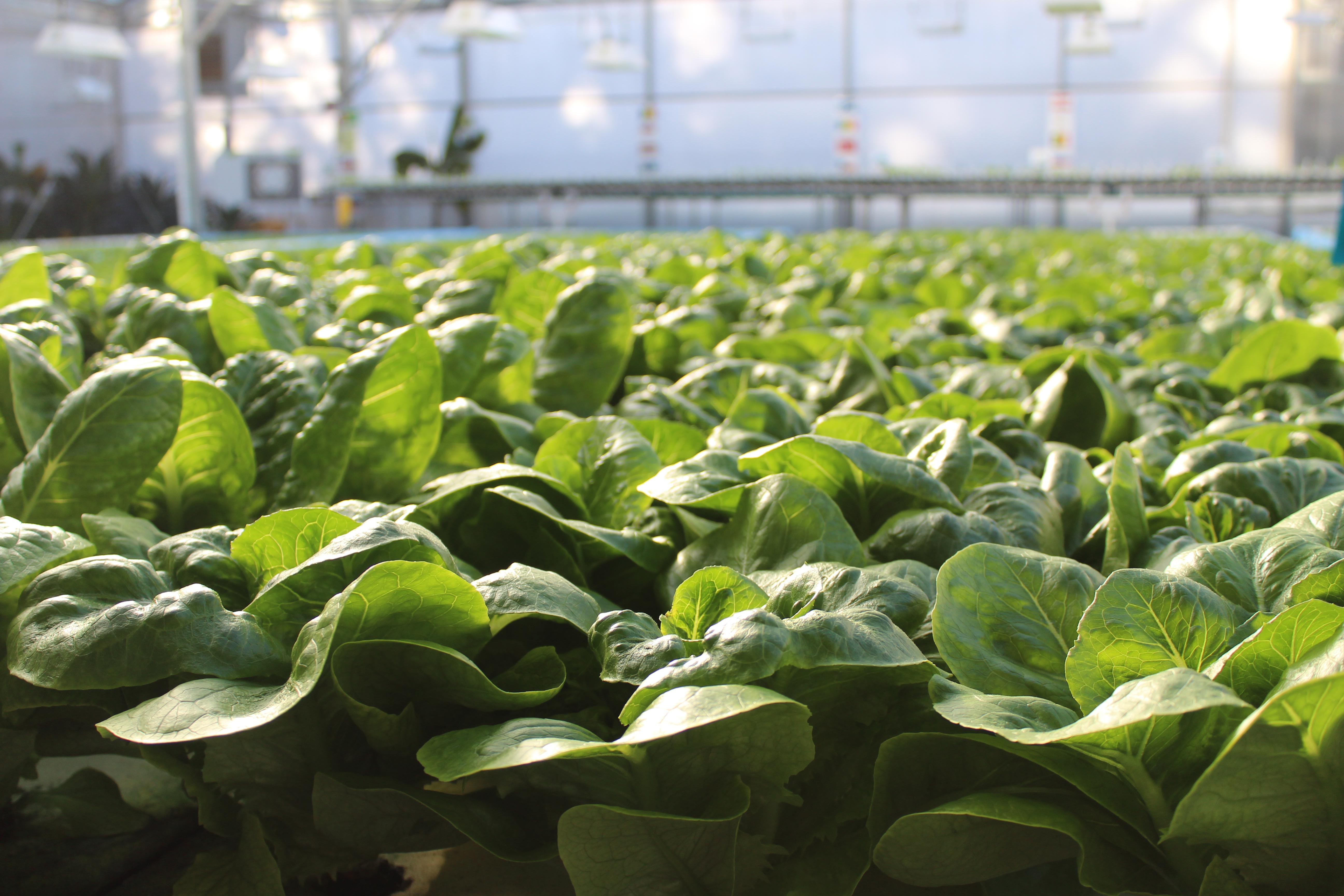 Organic Certified Naturally Grown Aquaponics