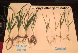 Organic Certified Naturally Grown Inputs
