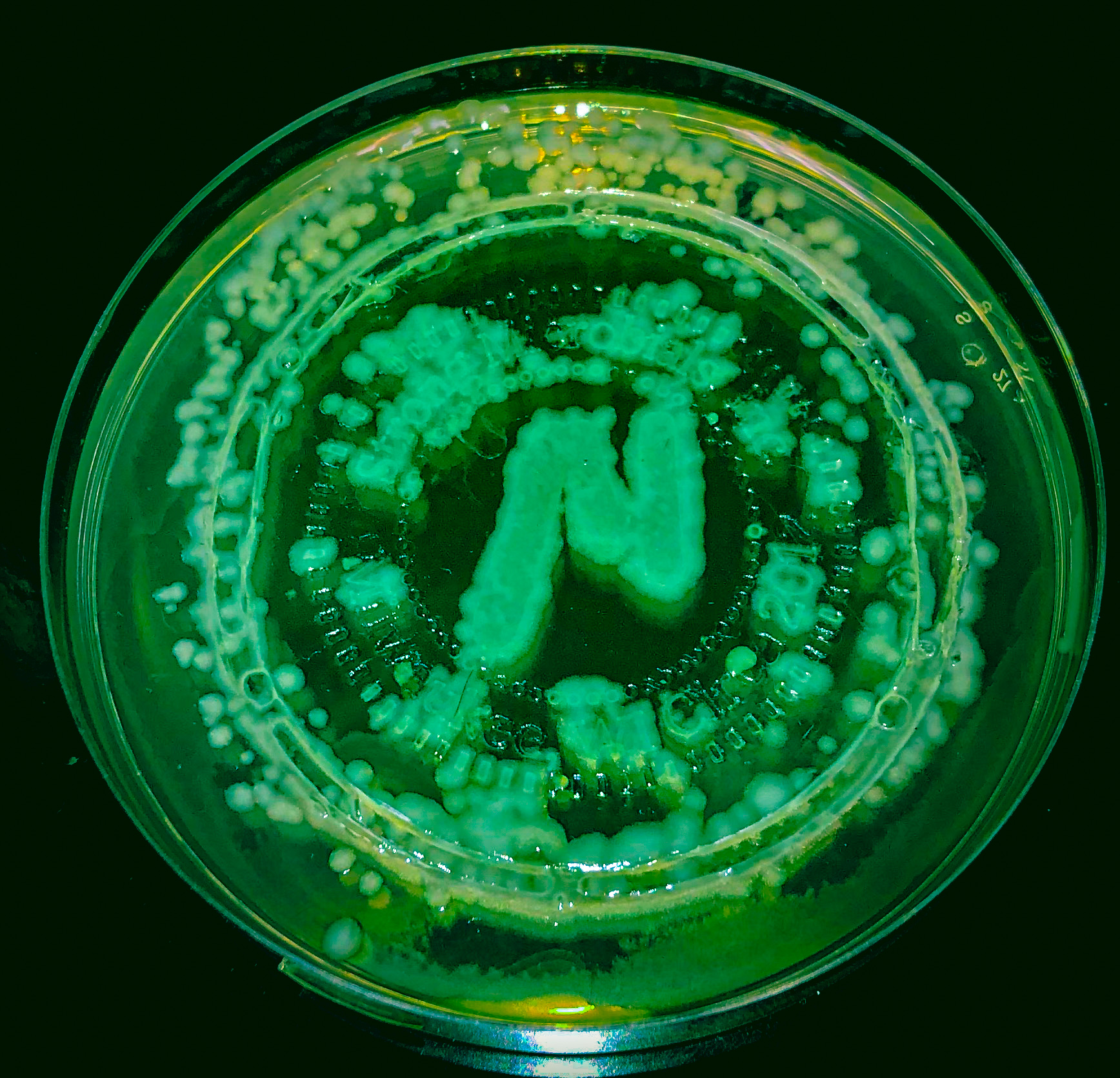 Strong Microbials
