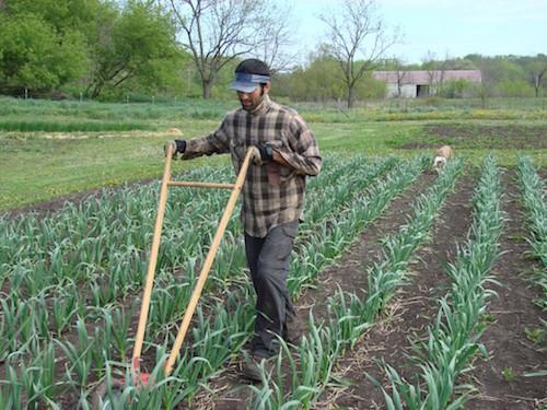 grassroots_family_farm.jpg