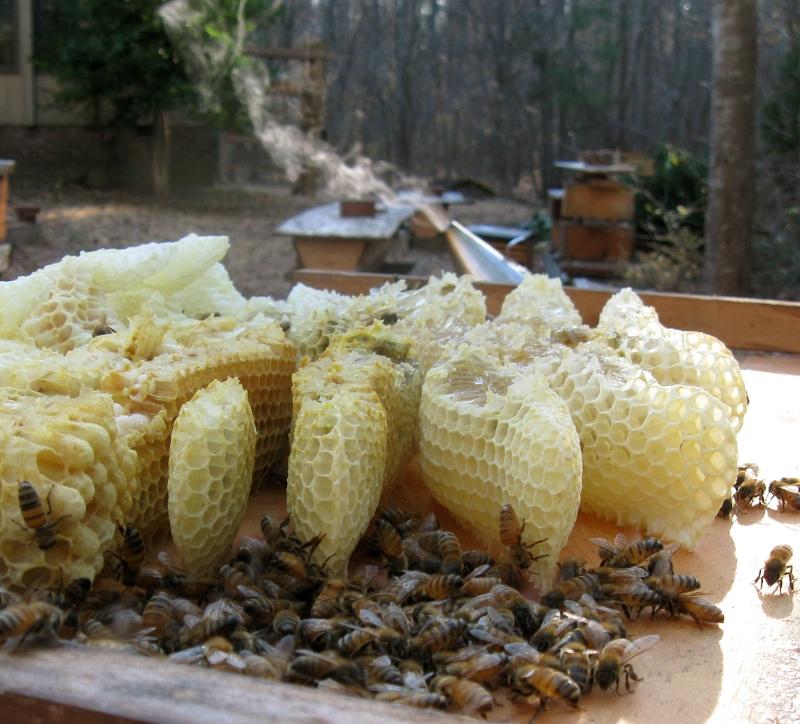 CarolinaBee_NC_bees__comb_and_smoker2.jpg