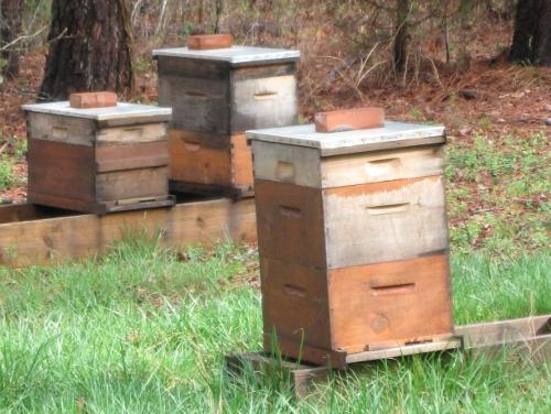 CarolinaBee_NC_spring_hives.jpg