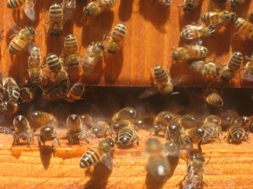 CarolinaBee_NC_bees___hive.jpg