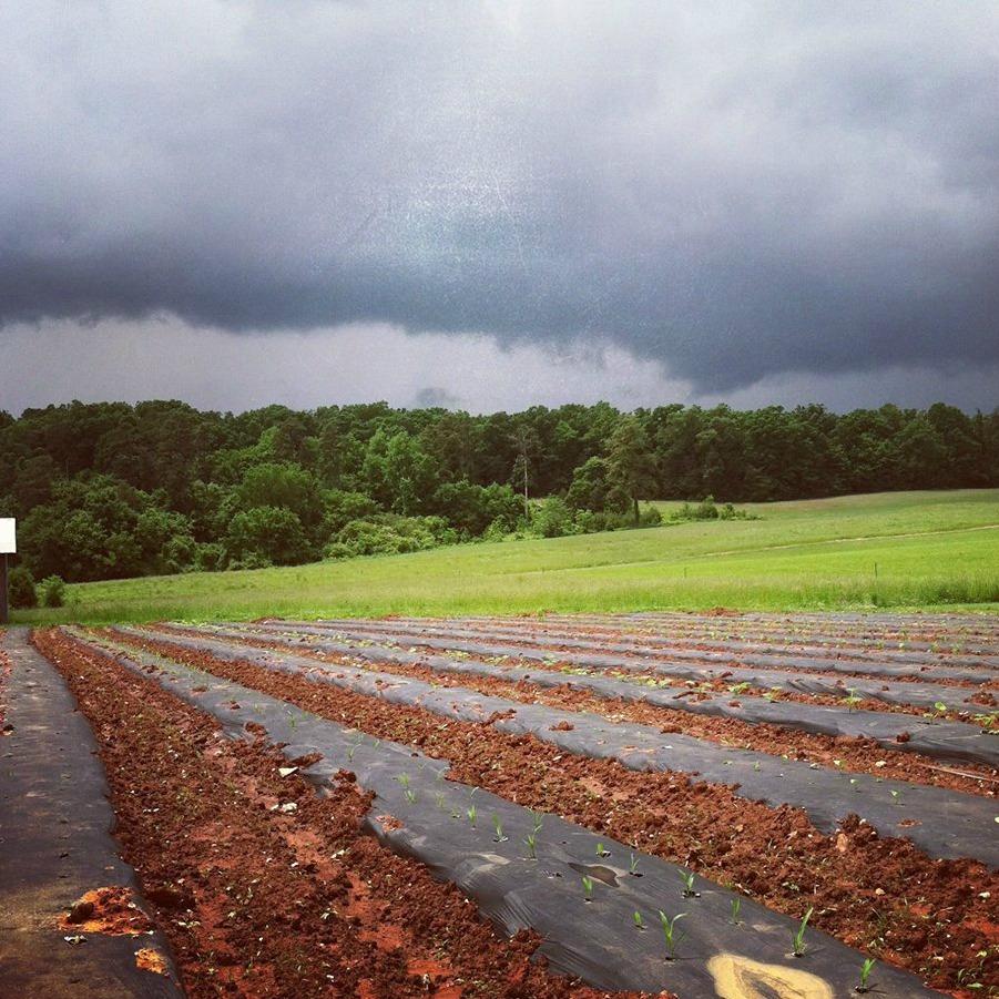 NC.CooperLasley.Stormy.jpg