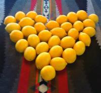 CA.LemonLadies.LemonsInAHeart.jpg