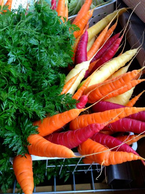 FL.FullEarth.Carrots-multicolored.jpg