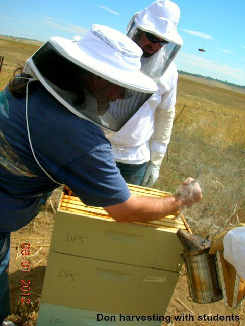 CO.HoneybeeKeepApiary.Harvesting.jpg