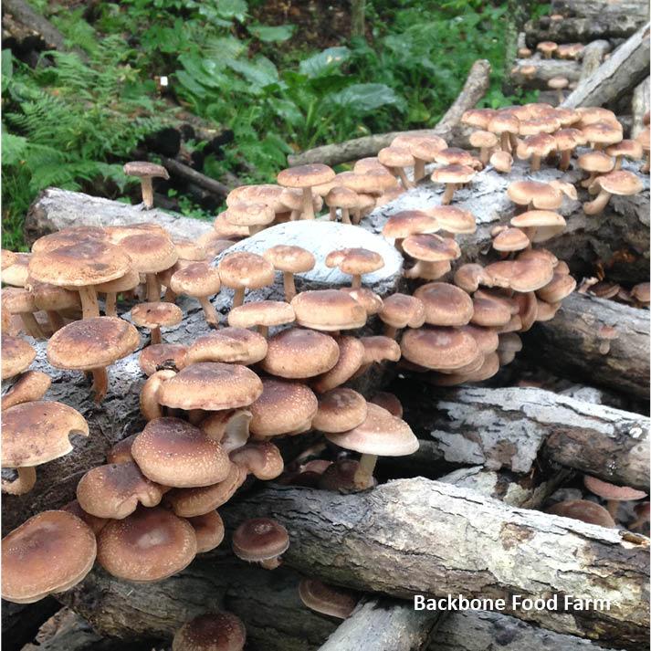 Mushroom_9.jpg