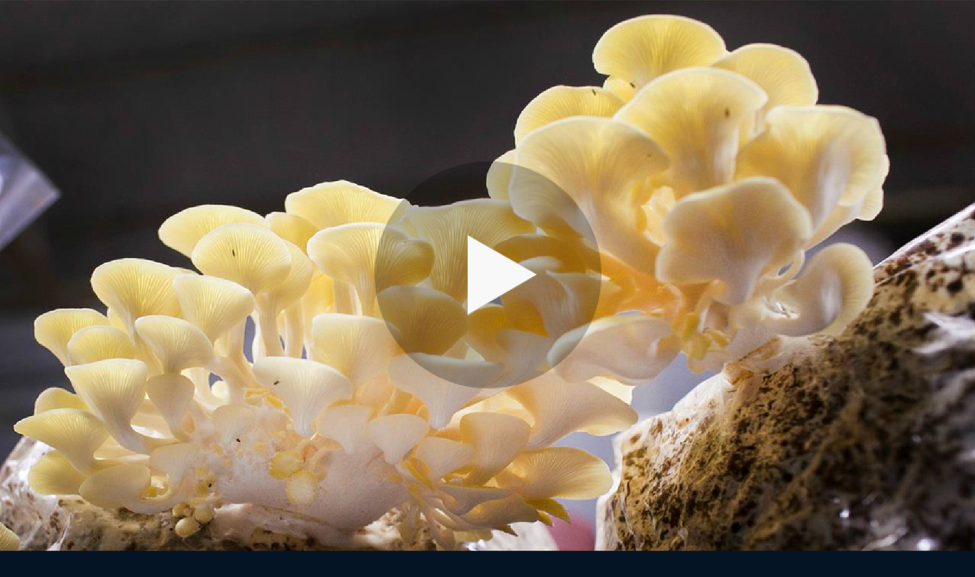 http://video.nationalgeographic.com/video/news/160708-news-mushroom-mountain-uses-vin
