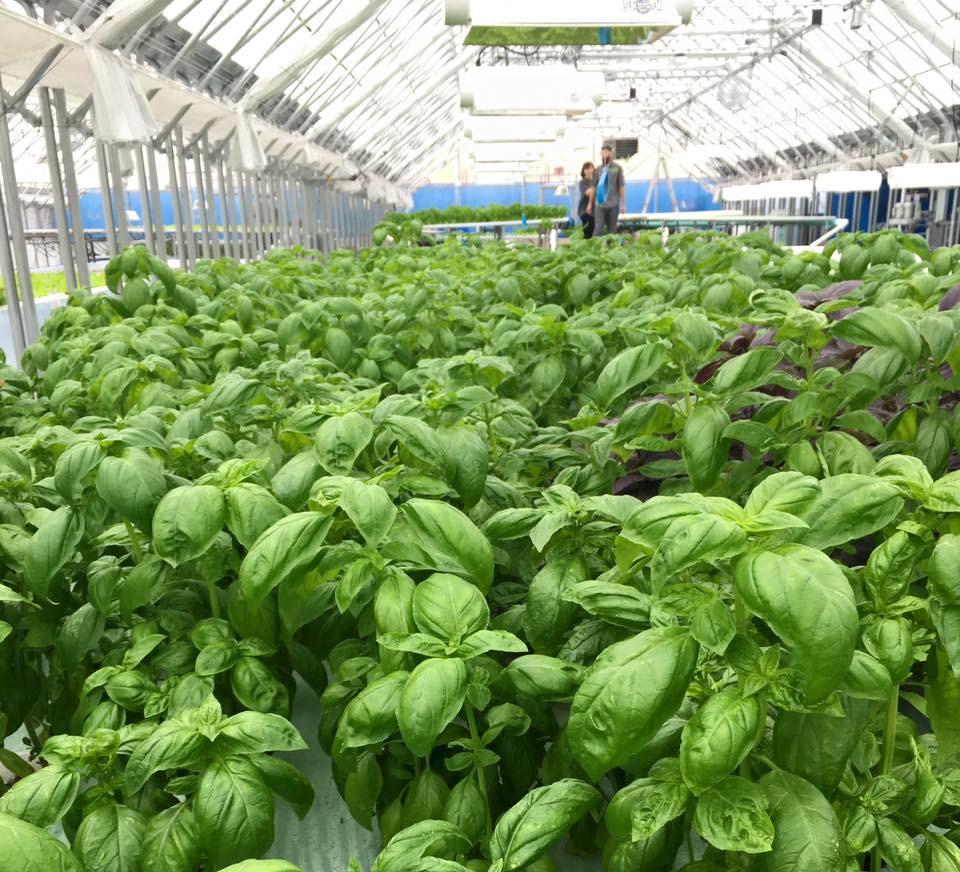 Metropolitan_Farms certified aquaponics.jpg