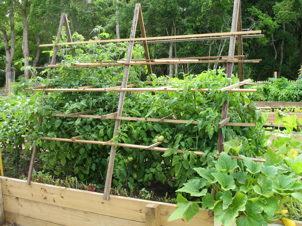 FL_-_The_Ragged_Glory_-_raised_bed_and_trellis_image_39341.jpg