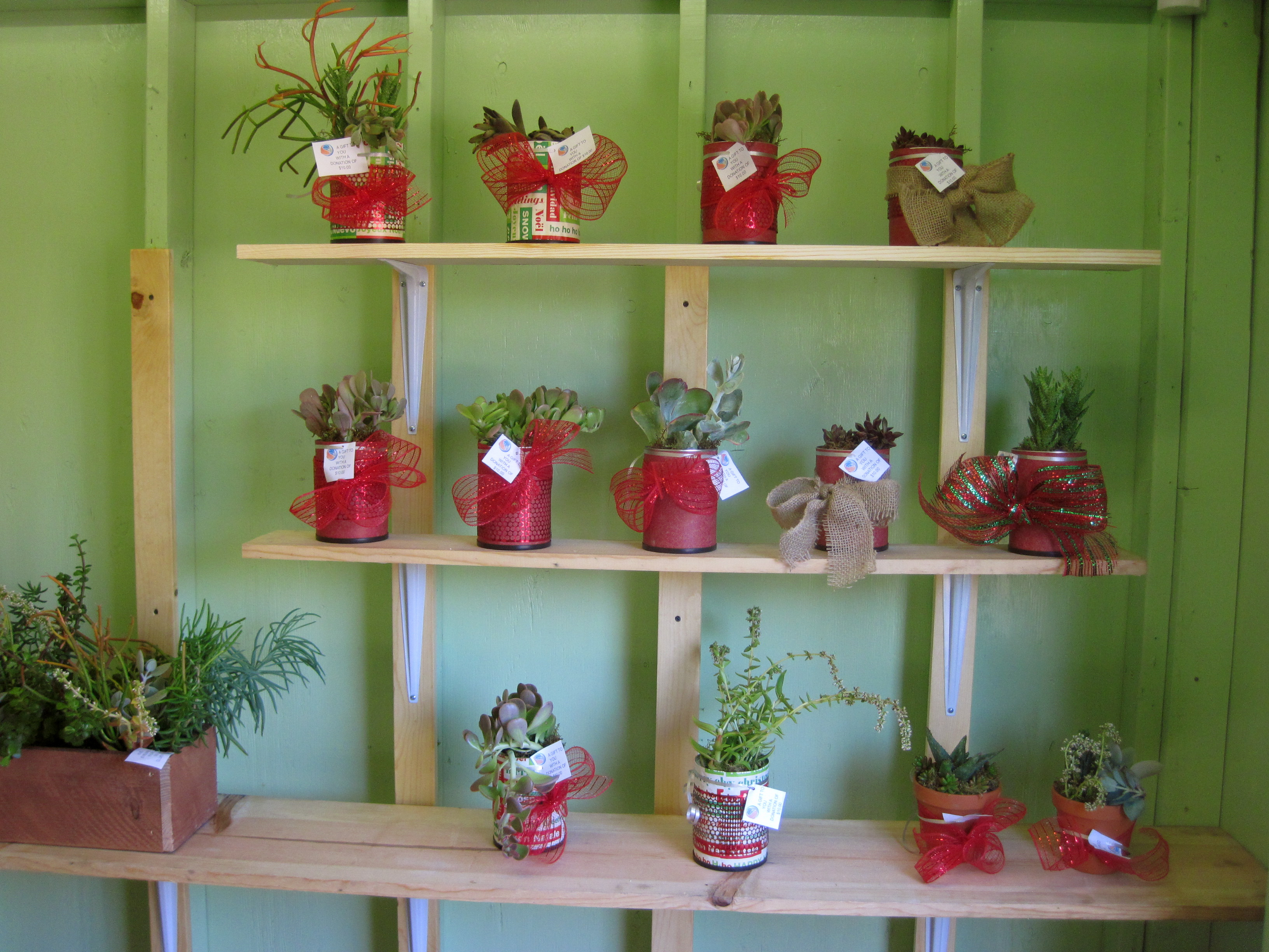 Christmassucculents.JPG